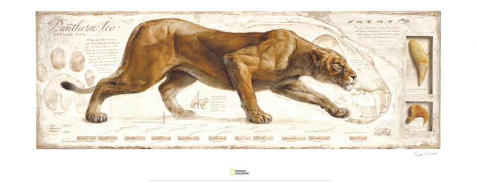 Poster Felinos National Geographic
